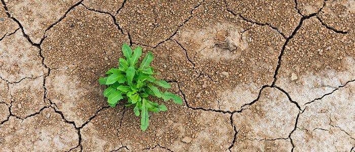 Resilienza: cos'è e come migliorarla
