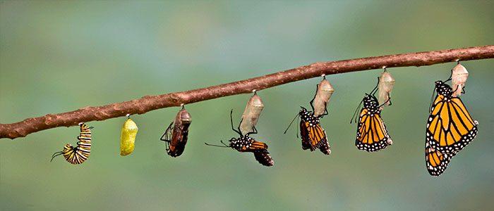 leadership-trasformazionale